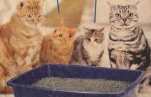 Cats like clean litter boxes